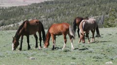 Wild horses grazing Stock Footage