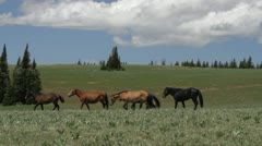 Wild horses on move Stock Footage