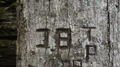 tree graffiti grafiti - stock footage