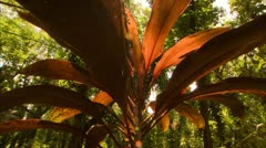 Sun Beams on a Large Red Plant, Tijuca Brazil HD Video Stock Footage