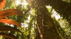 Sun Beams on a Large Red Plant, Tijuca Brazil HD Video - stock footage