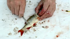Fisherman hands knife clean redyey bass fish scale guts sound Stock Footage