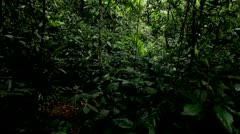 Dark Forest Floor, Tijuca Brazil HD Video - stock footage