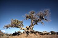 Big tree root Stock Photos