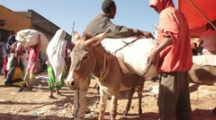 Donkey, The Mercato, Ethiopia, Addis Ababa, Open Air Market, Africa - stock footage