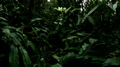 Dark Forest Floor, Tijuca Brazil HD Video Stock Footage