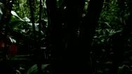 Silhoutted Trees in Tijuca Brazil HD Video Stock Footage