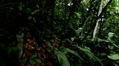 Undergrowth of the Tijuca Forest, Brazil HD Video - stock footage