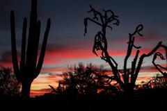 Arizona Desert Cactus Silhouettes Stock Photos