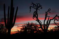 Arizona Desert Cactus Silhouettes Stock Photos