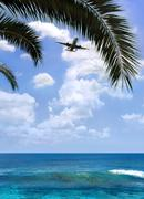 airplane over palm - stock photo