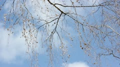 Branch with leaves in the wind Stock Footage