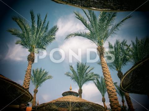 Stock photo of Palm trees and umbrellas with toy camera effect