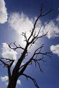 burnt bare tree branches silhouettes - stock photo