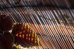 back lit dark leaf & bamboo fence - stock photo