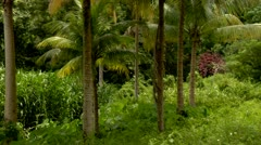 Plam Trees in the Jungle Stock Footage