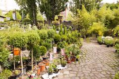 Plant nursery at mauerpark flea market berlin germany Stock Photos