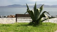 Agave Cactus and Bench - stock footage