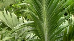 Jungle Flora Stock Footage