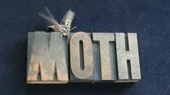 Sphinx moth on old wood type word Stock Footage