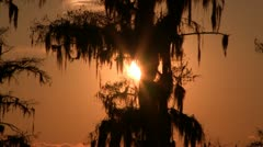 Sun setting behind mossy tree Stock Footage