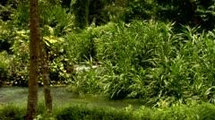 Roaring River, Jamaica Stock Footage