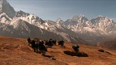 Wide shot of yaks crossing plateau below Mt. Everest. Stock Footage