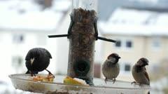 birds at the birdfeeder - stock footage