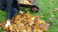 Woman worker hand load barrow cart autumn leaf garden carry Stock Footage