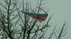 Trapped in the branches of a kite Stock Footage