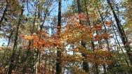Breezy autumn Stock Footage