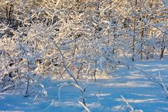 heavy snow on every branch - stock photo