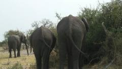 ELEPHANT TAILS Stock Footage