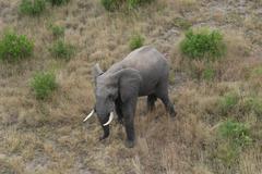 Photos of Africa African Elephants  - stock photo