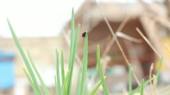 Ladybird on grass. Stock Footage