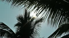 Palm Trees Lowangle against Sun 1 Stock Footage