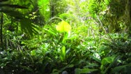 1920x1080 video - tropical green rain forest jungle Stock Footage