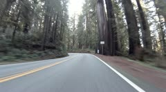 Driving through Redwoods Fast Realtime Jedediah Smith 2 Stock Footage