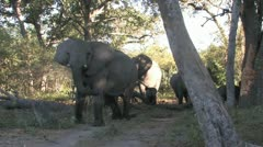 Elephants-Mom-Junior-Baby demand right-away Stock Footage