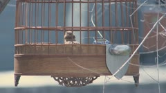 A bird in a cage Stock Footage