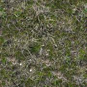 Grass Texture. - stock photo