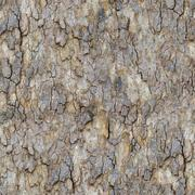Maple Bark. Seamless Texture. Stock Photos