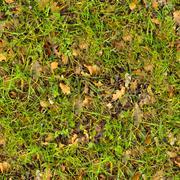 Forest Soil. Seamless Texture. - stock photo