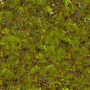 Moss Seamless Texture. Stock Photos