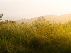 Stock Photo of field of grass during sunrise from chaeng hill, chiang rai