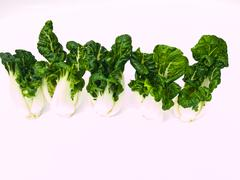 Bunch of fresh baby bok choy, brassica rapa chinensis,  isolated on white bac Stock Photos