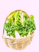 Fresh  baby bok choy and cos salad in ratten basket isolated on white backgro Stock Photos