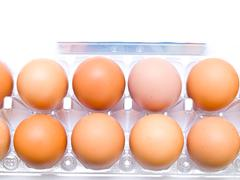 Stock Photo of eggs in plastic pack isolated on white  background