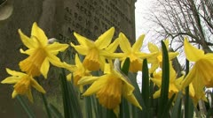 Grave stone and daffodils Stock Footage
