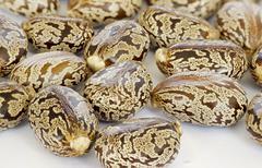 Castor oil seeds Stock Photos